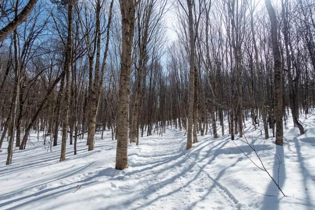 Seuls en forêt